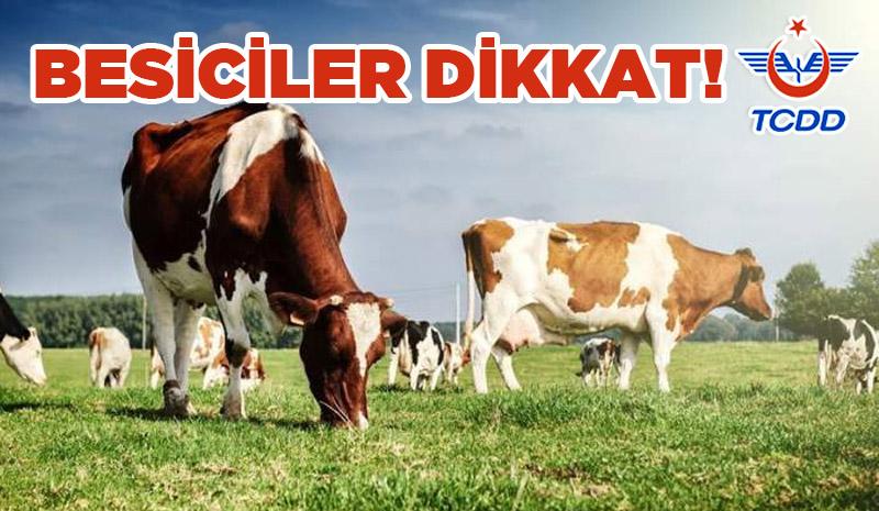 BESİCİLER DİKKAT!
