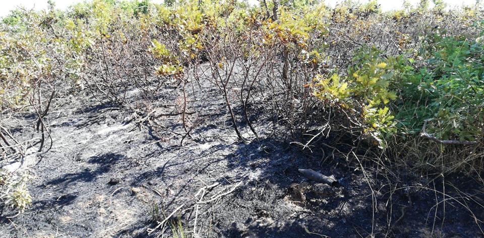 Güzeldere'de orman yangını