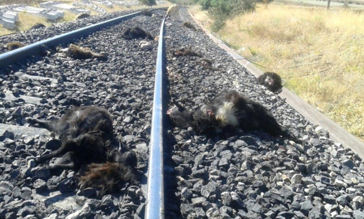 Trenin Çarptığı İneklerden 5'i Telef Oldu