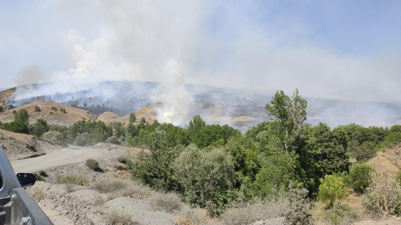 Servi Bölgesinde Orman Yangını